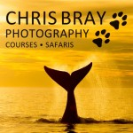 Chris Bray